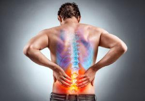 colonna vertebrale anatomia